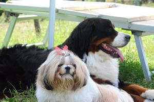 Agriturismo con cane Toscana