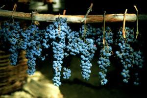 Azienda agricola biologica Toscana