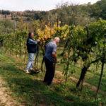raccolta uva